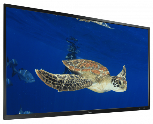 ifp_display-turtle-ovelay2_300dpi